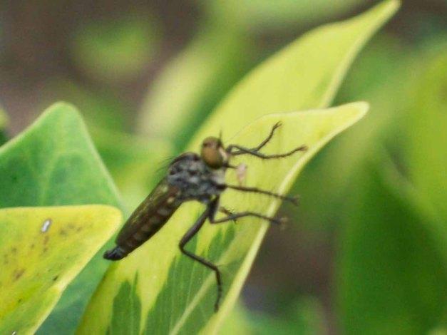 Photo seekor serangga ini bukti maksimalnya kamera 8,2 pixels.