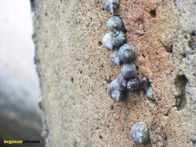 snails in the coast