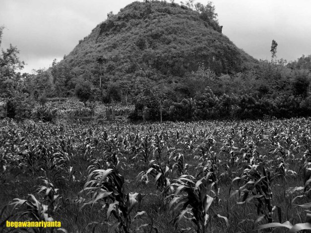 Another Karst Hill in Gunungkidul. Location: Semanu, Gunungkidul, Yogyakarta, Indonesia.